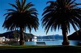 Picton, Marlborough, South Island, New Zealand Art Print
