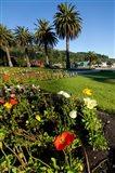 Poppy flowers, Picton, Marlborough, South Island, New Zealand Art Print
