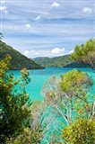 New Zealand, South Island, Marlborough, Nydia Bay Art Print
