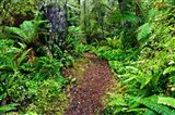 New Zealand, Otago, Old Coach Walking Path, Forest Art Print