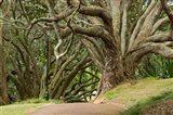 Trees, Central Park, Auckland, New Zealand Art Print