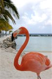 Pink Flamingo on Renaissance Island, Aruba, Caribbean Art Print