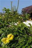 Yellow Flowers, Cacti and Home, Aruba, Caribbean Art Print