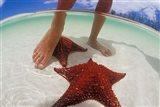 Starfish and Feet, Bahamas, Caribbean Art Print
