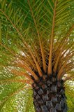 British Virgin Islands, Scrub Island Close Up Of The Underside Of A Palm Tree Art Print