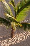 Palm tree, Bavaro Beach, Higuey, Punta Cana, Dominican Republic Art Print