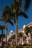 Palm tree, Riu Palace, Bavaro Beach, Higuey, Punta Cana, Dominican Republic Art Print