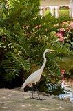 White Egret tropical bird, Bavaro, Higuey, Punta Cana, Dominican Republic Art Print