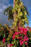 Bougainvillea flora, Bavaro, Higuey, Punta Cana, Dominican Republic Art Print