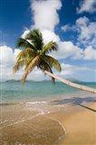 Coconut Grove Beach, Cades Bay, St Kitts, Caribbean Art Print