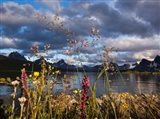 Wildflowers, Jasper National Park, Alberta, Canada Art Print