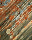 Lichens on stone, Banff NP, Alberta, Canada Art Print