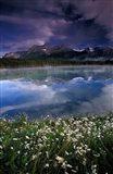 Alberta, Banff National Park Lake Maligne wildflowers Art Print