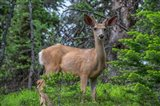 Deer In The Assiniboine Park, Canada Art Print