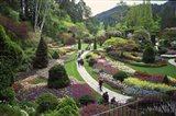 Tulips, Butchart Gardens, Victoria, British Columbia, Canada Art Print