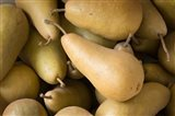 Canada, British Columbia, Cowichan Valley Close-Up Of Harvested Pears Art Print