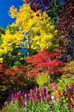 Autumn Color, Butchard Gardens, Victoria, British Columbia, Canada Art Print