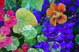 British Columbia, Victoria, Flowerboxes Art Print