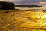Tide at Sunset on Campobello Island Art Print