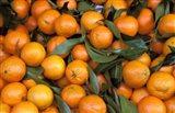 Oranges, Nasch Market, Austria Art Print