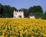 Sunflowers and Chateau, Loire Valley, France Art Print