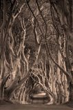 Beech Tree-Lined Road Known As The Dark Hedges, County Antrim, Northern Ireland Art Print
