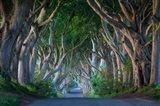 Beech Tree-Lined Road Dark Hedges Near Stanocum, Northern Ireland Art Print