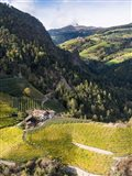 Viniculture Near Klausen In South Tyrol During Autumn, Italy Art Print