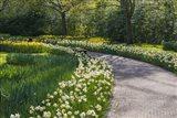 Sunlit Path In Daffodil Garden Art Print