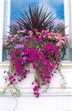 Flower Box in London, England Art Print
