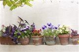 Attractive Flowers In Clay Pots Art Print