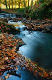 Stream with Autumn Leaves, Forest of Dean, UK Art Print