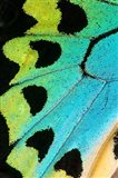 Wing Pattern Of Tropical Butterfly 5 Art Print