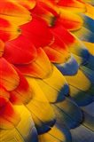 Scarlet Macaw Wing Covert Feathers 2 Art Print