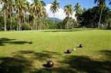Lawn bowling, Taveuni Estates, Taveuni, Fiji Art Print