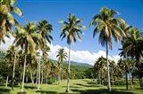 Golf course, Taveuni Estates, Fiji Art Print