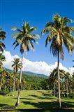 Golf course, Taveuni Estates, Taveuni, Fiji Art Print