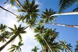 Coconut palm grove, Lavena Village, Taveuni, Fiji Art Print