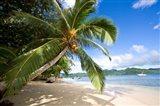 Palm Tree at Matangi Privite Island Resort, Fiji Art Print
