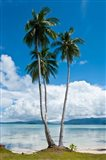 Lonely Palm Tree In The Marovo Lagoon, Solomon Islands Art Print