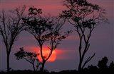 Amazonia Sunset Art Print