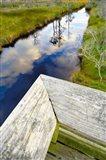 Ward Ware Nature Park, Gulf Shores Alabama Art Print