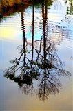 Reflections in a Stream, Ward Ware Nature Park, Gulf Shores Alabama Art Print
