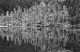 Alaska, Inside Passage, Reflecting Trees Art Print