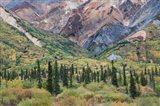 Alaska, Fall Foliage, Sheep Mountain Art Print