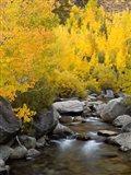 California, Eastern Sierra Bishop Creek During Autumn Art Print