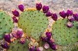 California Prickly Pear Cactus Art Print