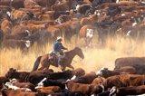 Cowboy Cattle Drive Art Print