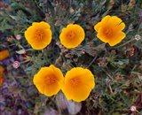 Yellow Desert Flowers Art Print