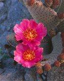 Cactus Flowers In Spring Art Print